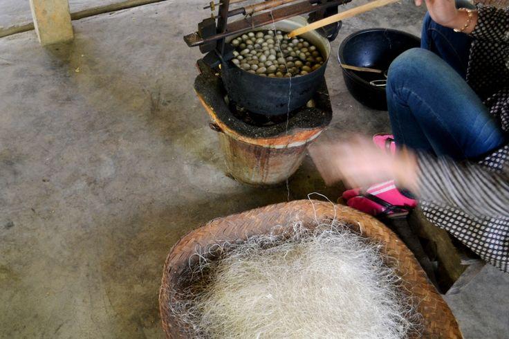 laos, prokuvavanje caura svilene bube radi ekstrakcije lutke(dakle, sprecavanje lutke da postane moljac=ubijanja,) i dobijanja ciste svile