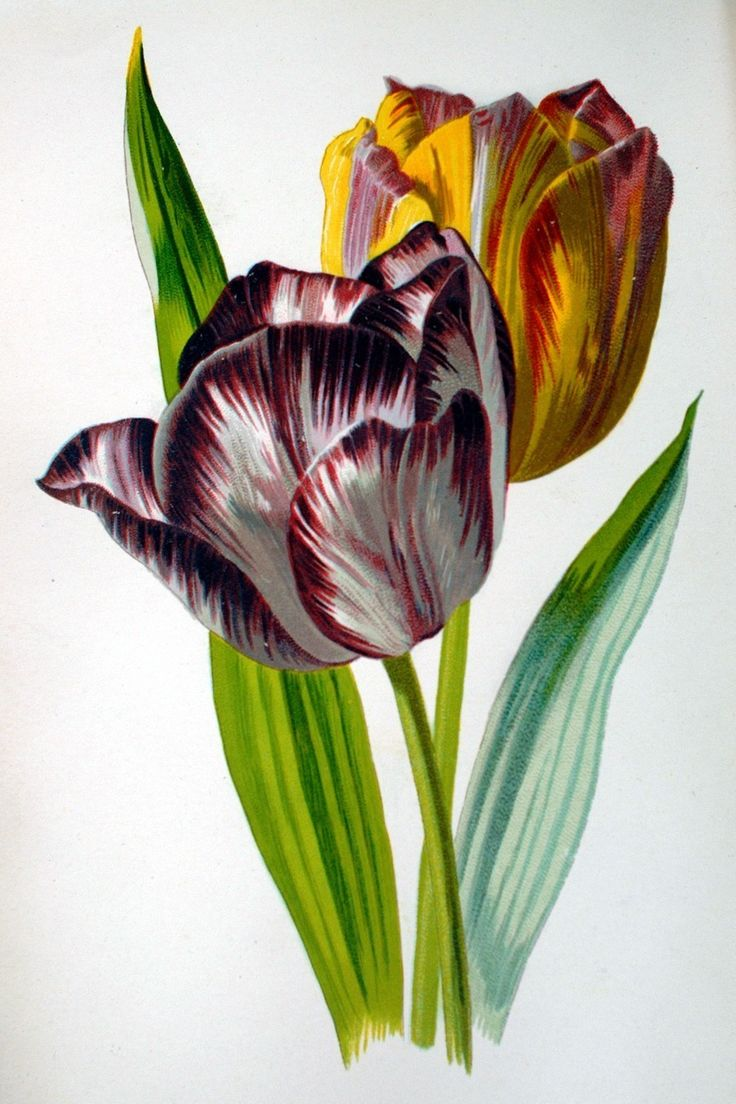This is a plate from the latter, by Frederick Edward Hulme, probably from the 1880s.