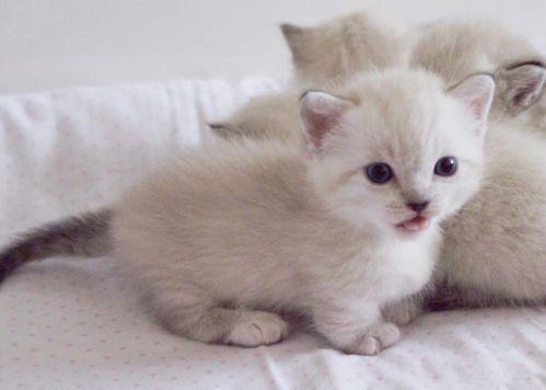 prettiest cat in the world