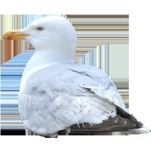 Brightonguiden.se - new guide to Brighton in Swedish. Gotta love the seagull!