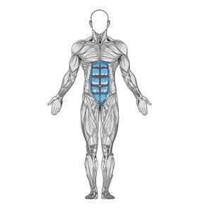 Bodybuilding.com - Lower Back Curl - Male and female examples - flexibility