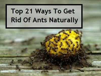 get rid of ants naturally helpful household tips pinterest. Black Bedroom Furniture Sets. Home Design Ideas