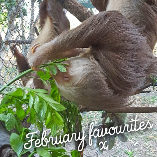 February favourites - Costa Rica Special - Read it on www.quirkylittleplanet.com