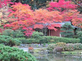 Seattle Japanese Garden Community Blog: Maple Fest - some 10 days later...