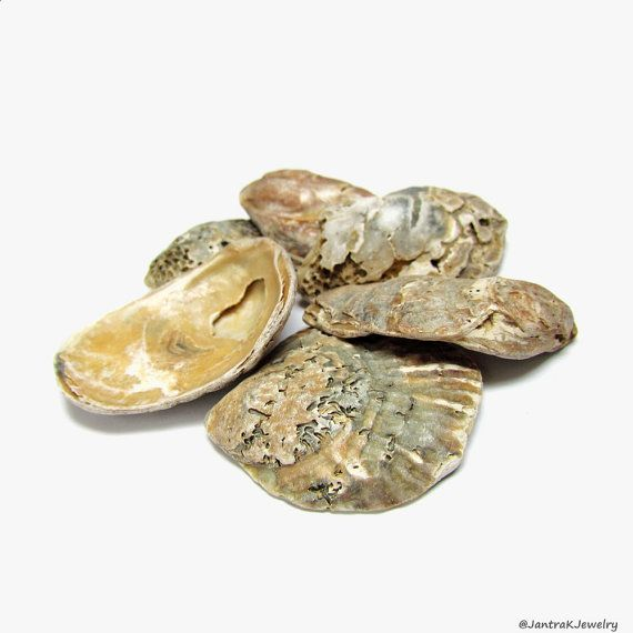 Rustic oyster shells Small lot of craft shells Large by JantraK