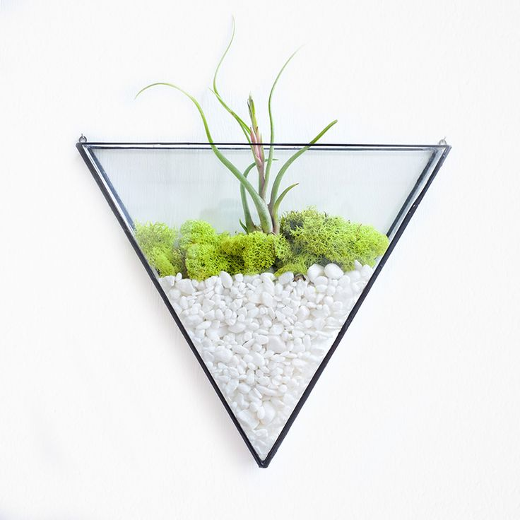 Equilateral wall terrarium. Plant not included.
