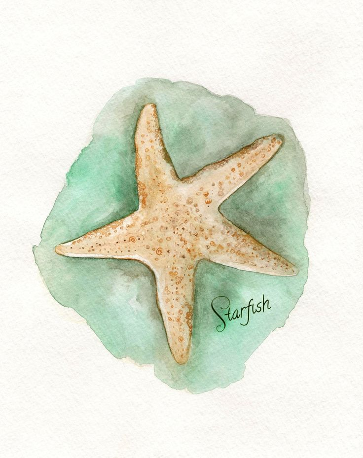 Starfish/ watercolor print/teal/light green/Archival Print by kellybermudez on Etsy https://www.etsy.com/listing/96564871/starfish-watercolor-printteallight
