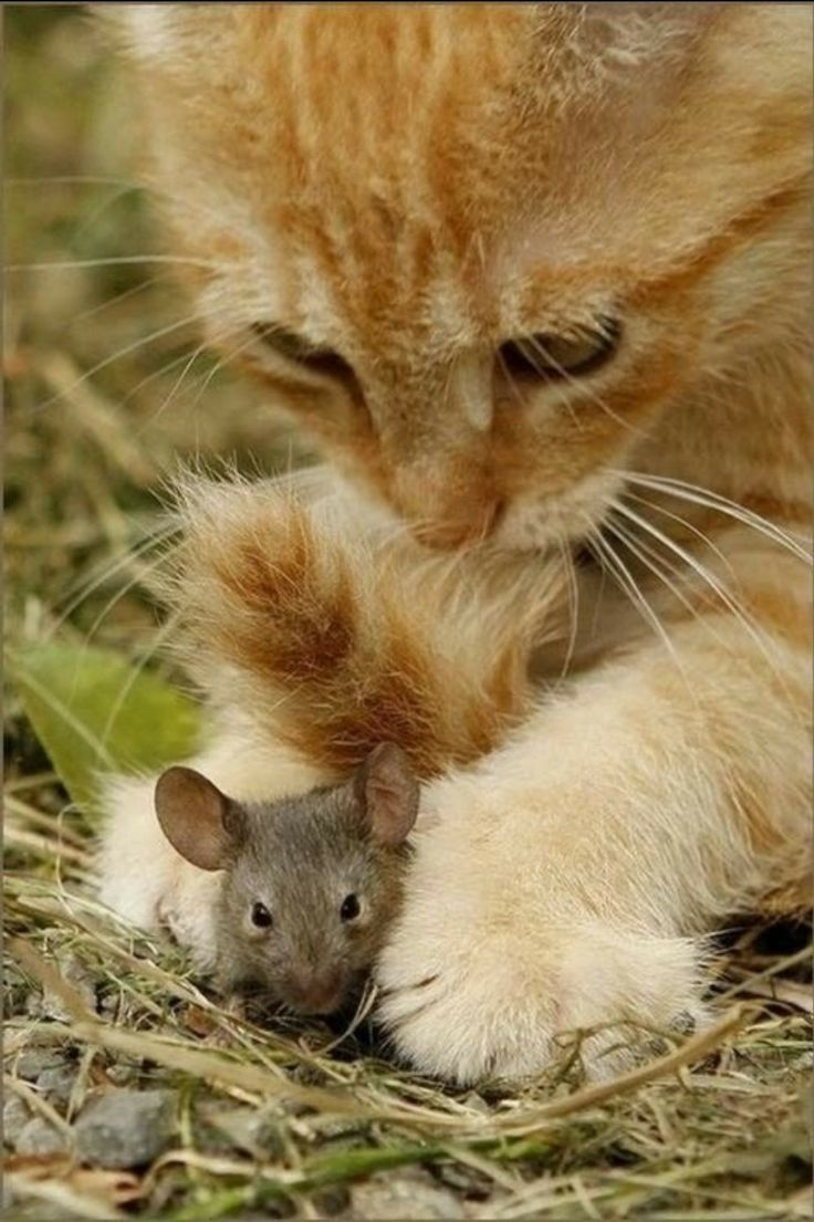 фото типовая картинки кошки с мышками пользовании аппаратом