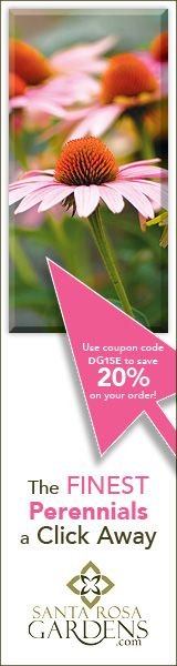 PlantFiles: Detailed information on Hosta Hosta 'Guacamole'