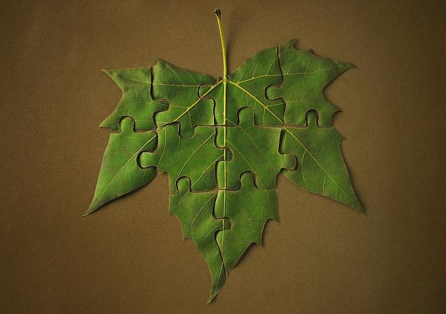 nature puzzle   matoses