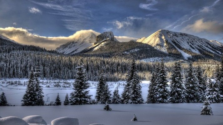 Fabulous Winter Forest & Peaks wallpapers and stock photos