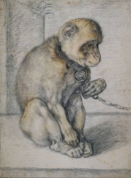 Hendrick Goltzius (Dutch, 1558-1617), Monkey on a chain, seated, ca. 1597, chalk on paper