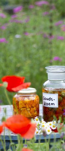 Zelf Goudsbloemolie maken : te gebruiken bij zonnebrand of kleine wondjes of als badolie