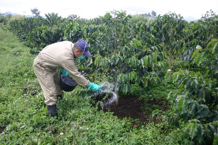 Guía de fertilización del café. 9 ideas para mejorar productividad y sostenibilidad reduciendo costes. Ideas, Chemical Property, Sustainability, Productivity, Thoughts