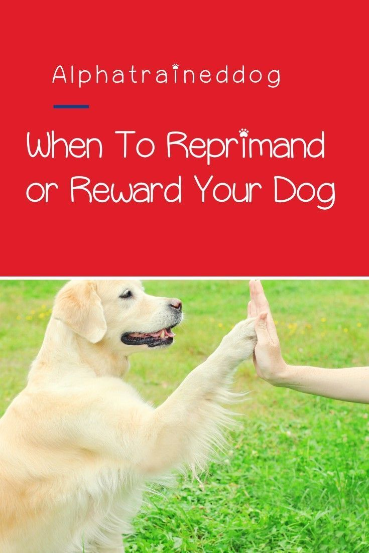 Dog Training When To Reprimand And When To Reward In 2020 Dog