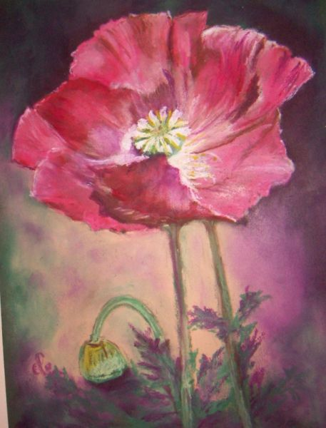 DESSIN fleur coquelicot pastel Fleurs Pastel  - joli coquelicot