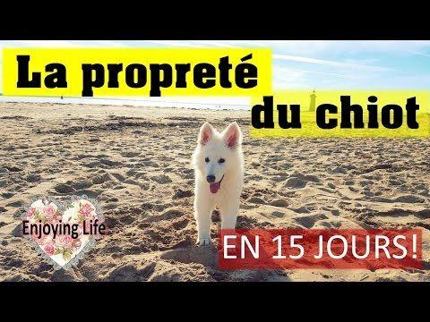 APPRENDRE LA PROPRETÉ A SON CHIOT - EN 15 JOURS - Mon histoire ✿ - YouTube