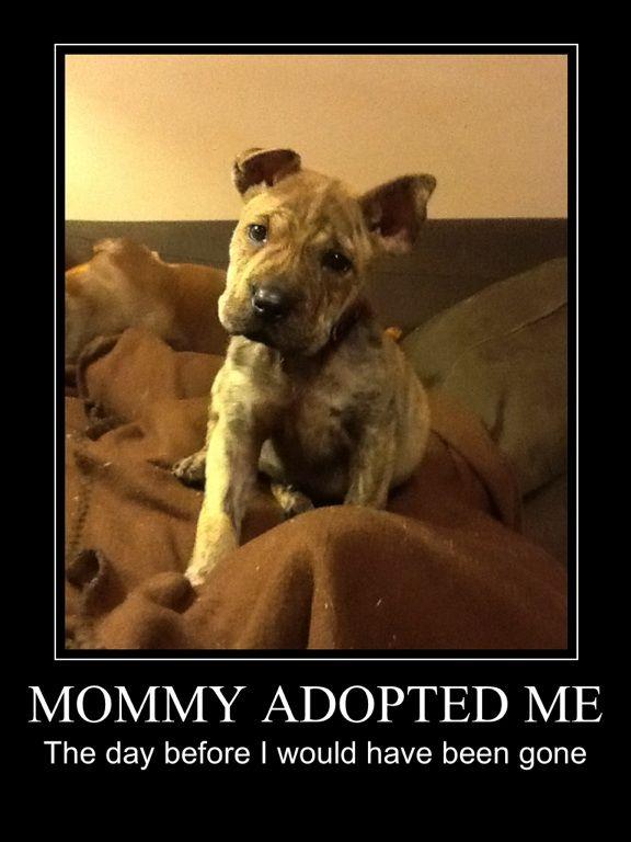 Adopt!                                                                                                                                                                                 More