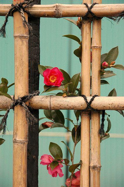 竹垣とツバキ bamboo fence and camellia