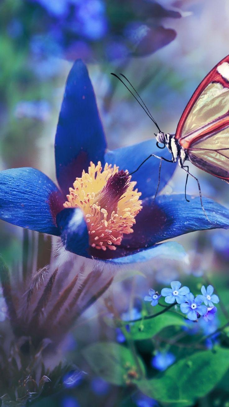 1080x1920 Blue flower, butterfly, meadow, macro wallpaper