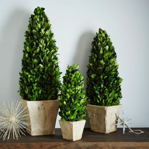 Boxwood Trees   west elm, Which room would you put these in? http://keep.com/boxwood-trees-west-elm-by-samantha_h1/k/3UmqbcgBKM/