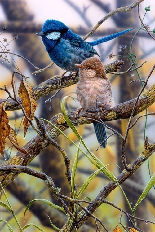 Blue wren looking couple #carrymehome #amreading #historicalromance www.dorothyadamek.com: