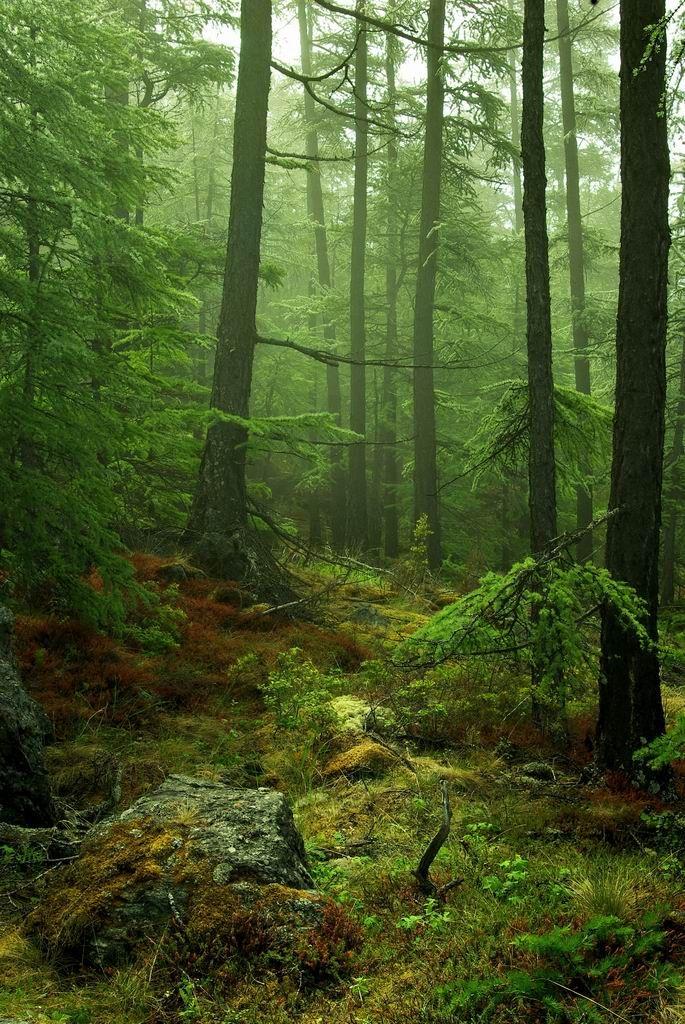 baikal forest @Vasili Vlahos Maslyukov
