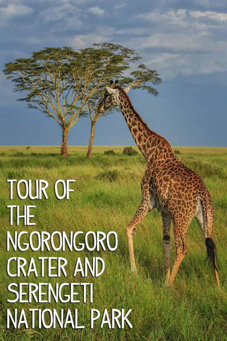 Best Visit Tanzania Images On Pinterest Traveling Africans - 9 things to see and do in serengeti national park