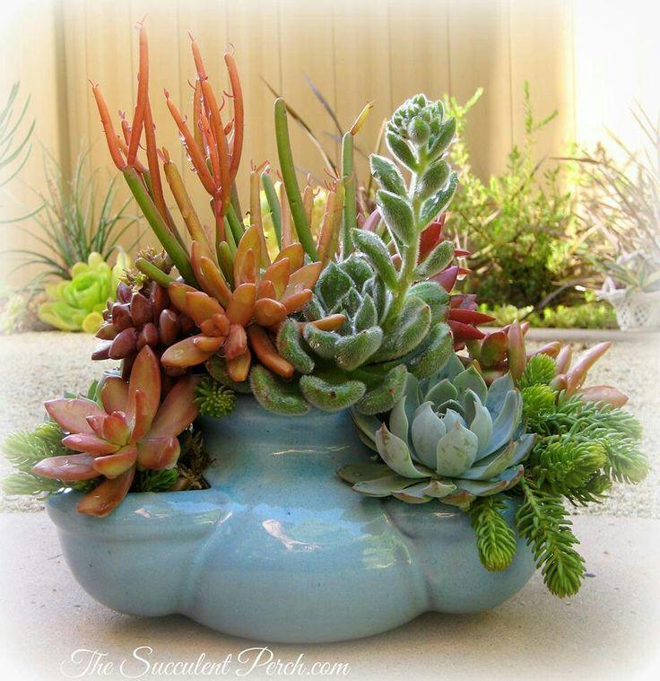 Elegant Succulent Plants In Containers