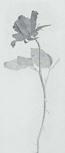 Sabe-se que esta obra de David Hockney foi realizada a partir da História Fundevogel, para Seis Contos de Fadas dos Irmãos Grimm. the rose and rose stalk, 1969