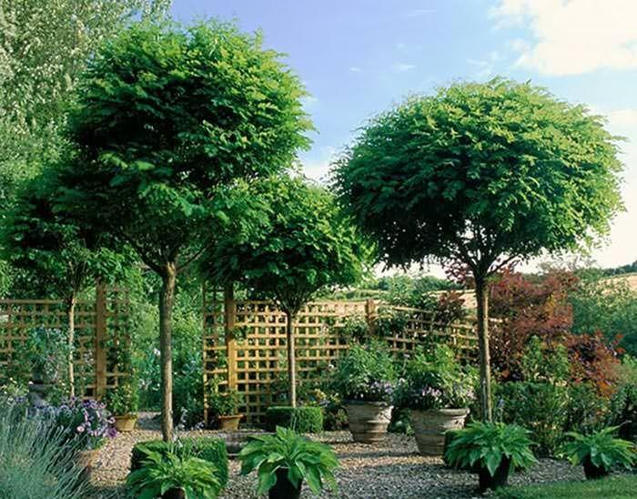 edb4de92c71717a0077a57a33329117d - Best Screening Trees For Small Gardens