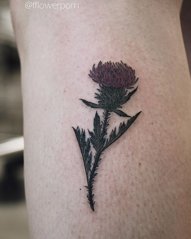 Little thistle #tattoo #tattoos #ink #inked #tattooed #tattooist #design #flower #flowers #plants #botanical #tattooistartmagazine #tatrussia #tattoodo #toptattooartists #thebesttattooartists #tattoorevuemag #tattoscute #tattoo_artwork #tattoo_worldwide_online #equilattera