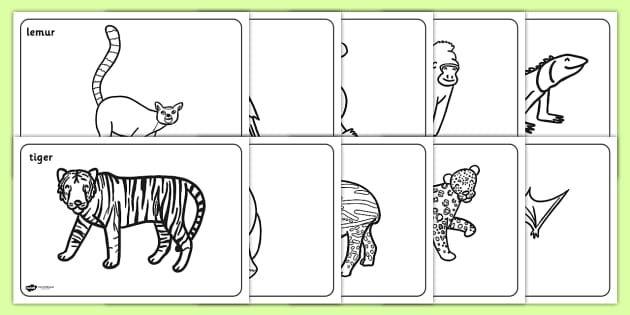 Free Jungle Rainforest Coloring Sheets Teacher Made In 2020 Rainforest Animals Farm Animal Coloring Pages Animal Coloring Pages