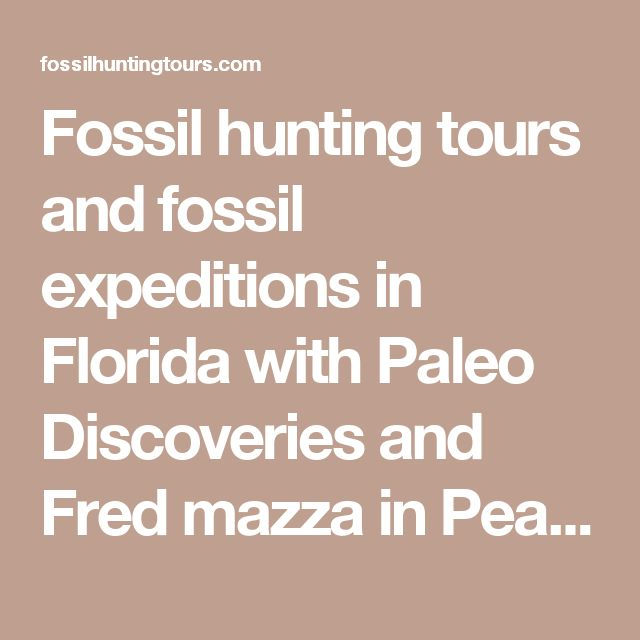 Fossil hunting tours and fossil expeditions in Florida with Paleo Discoveries and Fred mazza in Peace River | 772-539-7005 Fossil Hunting Tours Florida