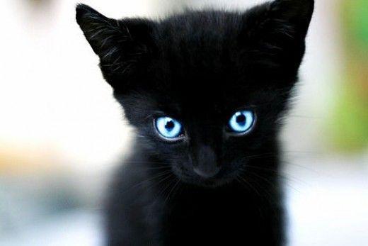 25 ωραιότατες μαύρες γάτες (που αν παλιά τις έκανες παρέα, καταδικαζόσουν σε θάνατο)