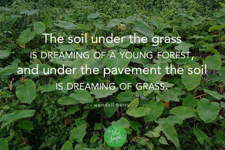 """The soil under the grass is dreaming of a young forest, and under the pavement the soil is dreaming of grass."" - Wendell Berry."
