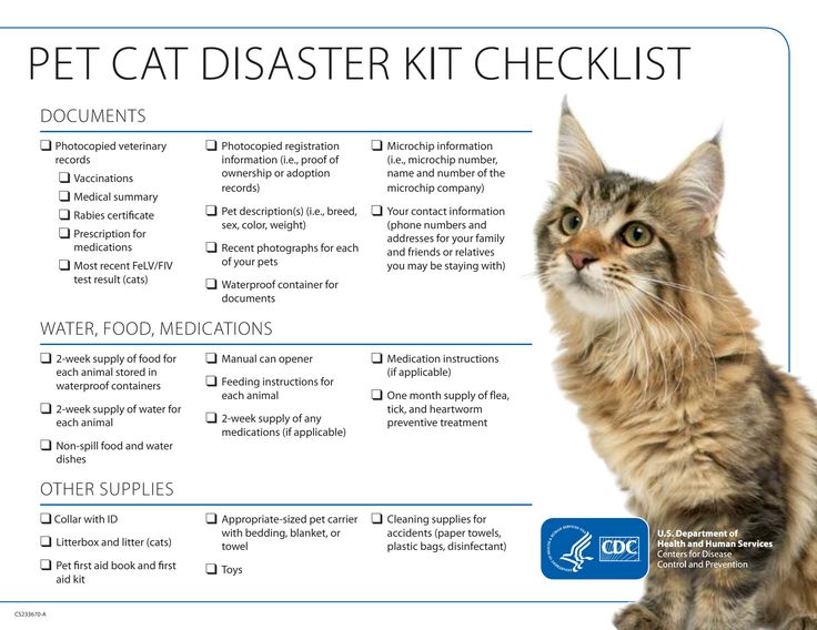 Pet Cat Disaster Kit Checklist Emergency Preparedness