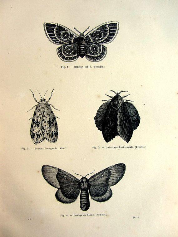 1860 antichi originali lepidotteri farfalle incisione, piastra vintage falena, francese illustrazione di lepidotera stampa, papillon farfalla