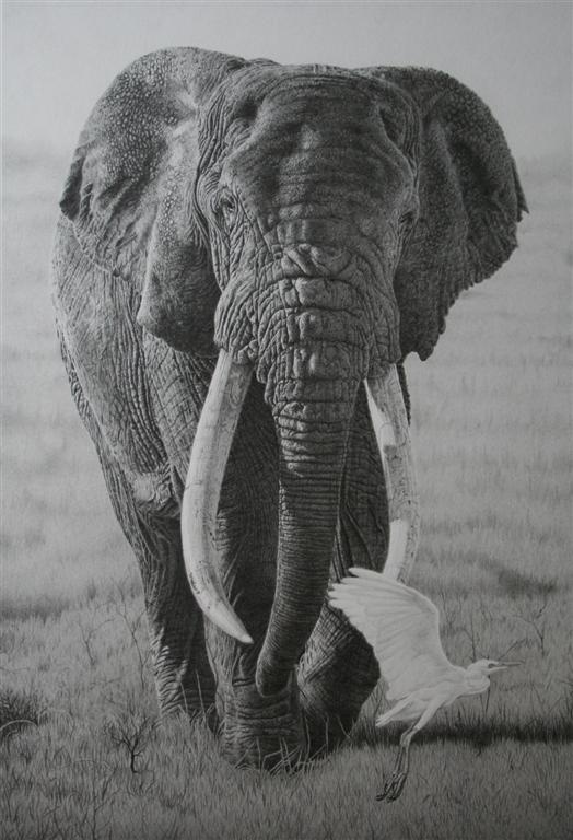 72 best Animal graphite art images on Pinterest | Pencil ... Realistic Elephant Drawing