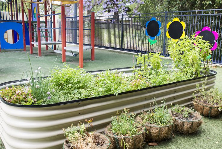 Best preschool living things project images on