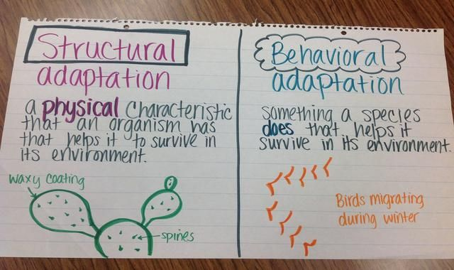fifth grade anchor charts | 5th Grade at Decker Elementary - Science Resources