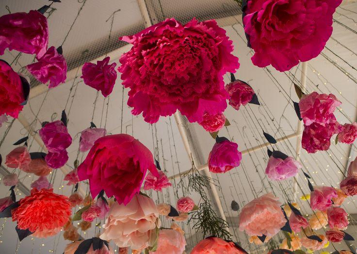flowers, flowershow, flower show, perth royal show