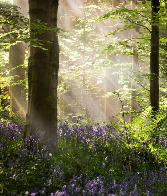 Bluebell Woods, Co. Down, Ireland  I love magical places like this....stunning! K