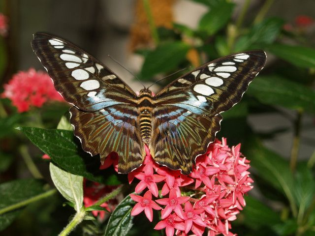 503 Best Images About The Butterfly Garden On Pinterest