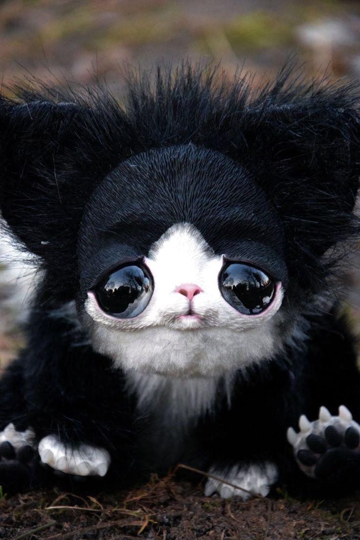 Купить черно белого кота
