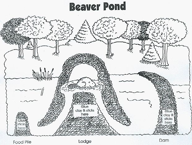 beaver pond to go with Paddle to the Sea