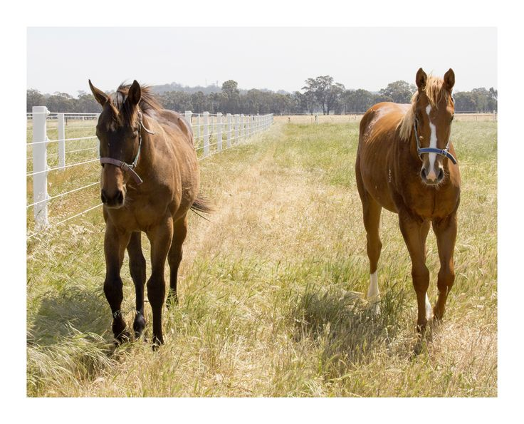 Our Zupaone colt and our Von Costa colt named General Von Costa