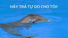 Peta Asia - Stop the construction of the performing dolphins in Da Nang, Vietnam