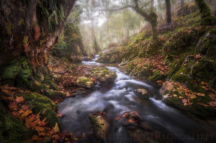 Autumn in the Sierra Negra Highlands, Sierra Negra de Puebla, México.