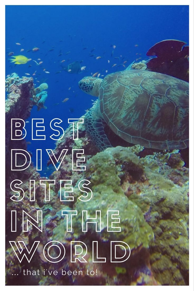Wondering what the Best Dive Sites in the World are? For beginners? Liveaboards, wildlife, cheap, land based, whale sharks and mantas! Check it out!